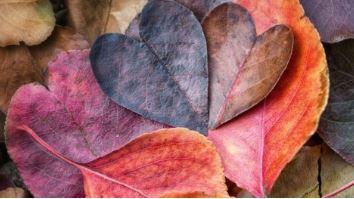 fall leaves shaped like hearts