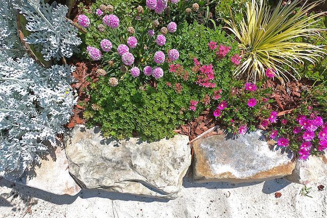 Boulder Edging-Succulents-Flowers-Sand