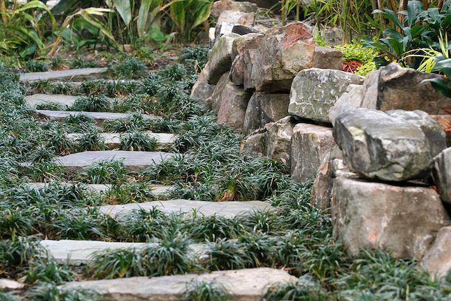 Pathway-Mondo Grass-Steps-Boulder Wall-Elevation