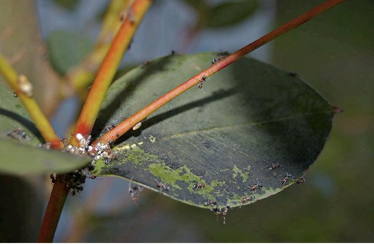 Image of leaf damage