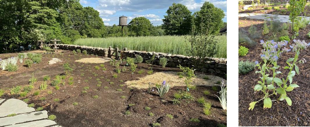 Images of Edible garden