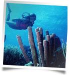 scuba-vents.jpg
