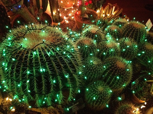 cactus with lights
