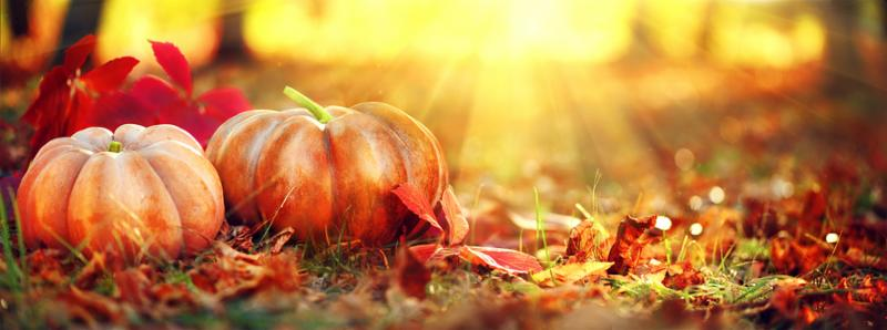 Autumn Thanksgiving day background. Halloween Pumpkins_ patch. Beauty Holiday autumn festival concept. Fall scene. Orange pumpkin over beauty bright autumnal nature background. Harvest