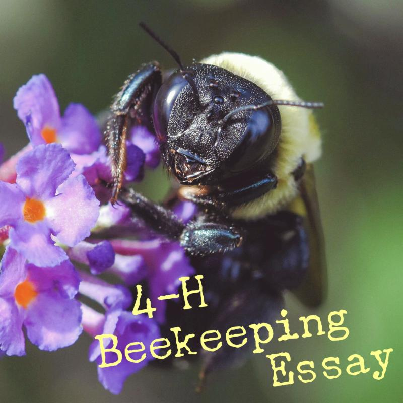 Bee hanging out in a flower with text reading 4-H Beekeeping Essay