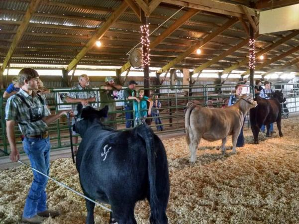 Youth showing their cattle at the 2017 Moore County Livestock Circuit Show.