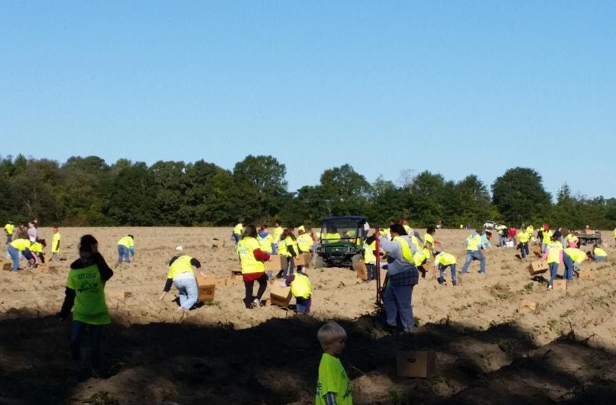 Group of 4-H members and families Potato Gleaning