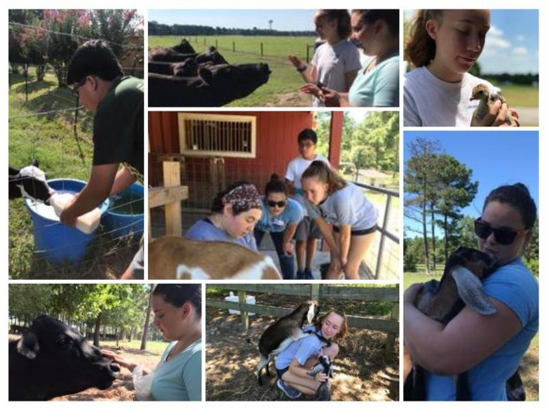 Collage of our 4-H Senior Livestock Camp experience.