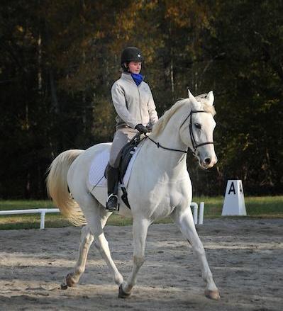 Dressage Horse Show