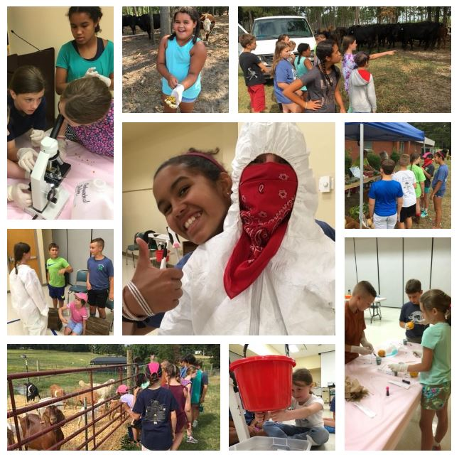 Collage of the 4-H Junior Livestock Experience.