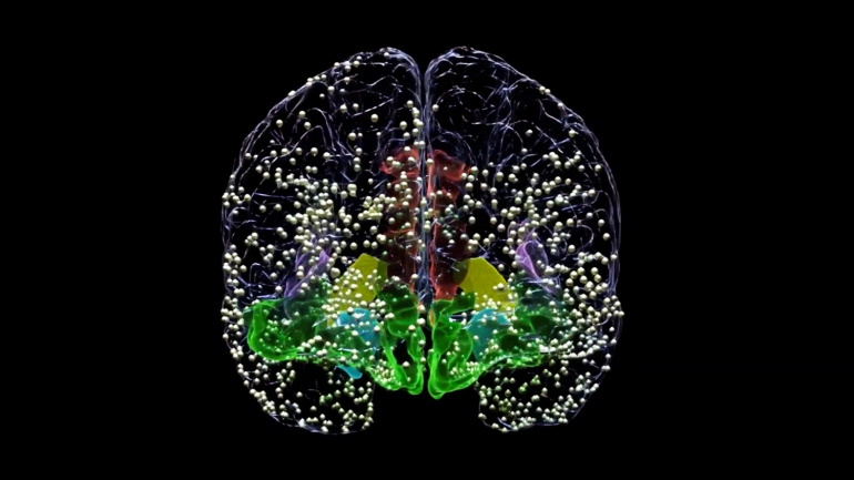 Animation still of a human brain