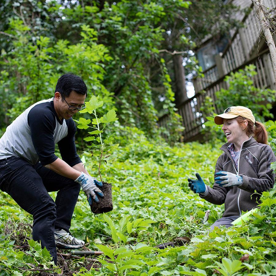 Two volunteers plant a tree on Mount Sutro