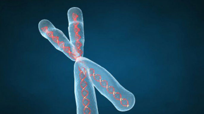 DNA Chromosome