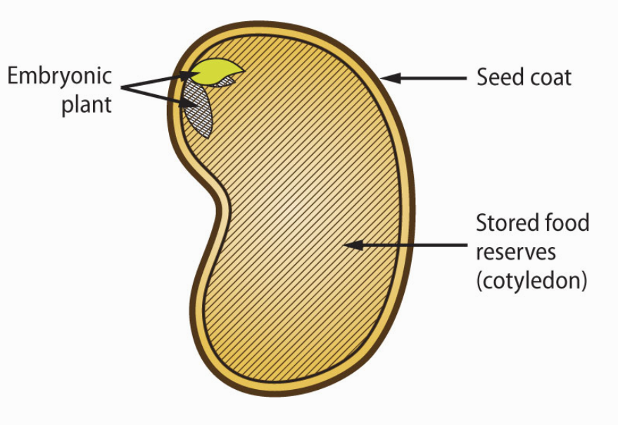 Seed structure from MG handbook