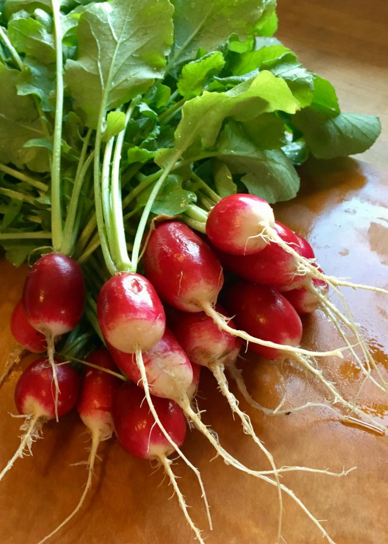 Freshly harvested French Breakfast radishes by Anne McDermott. From UC ANR Repository