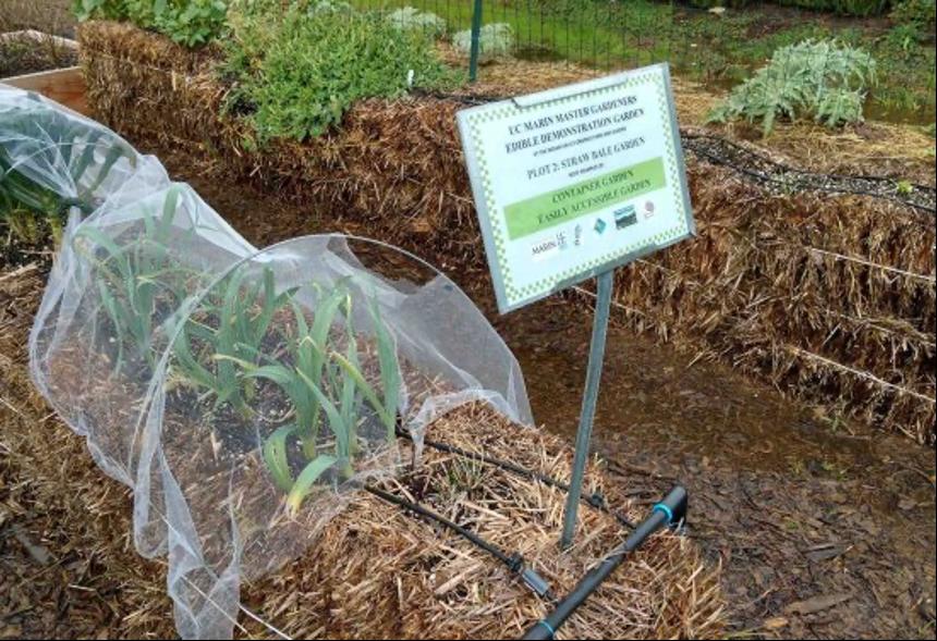 Straw bale demonstration garden by Marin County UC Master Gardeners (Courtesy UCANR)