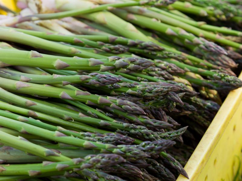 Asparagus photo from Rutgers website
