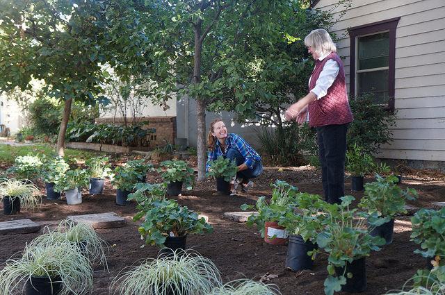 Planting California natives