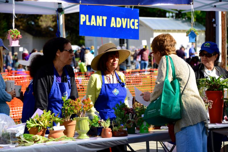 Giving plant advice to the public at an event
