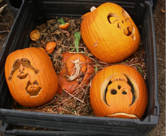 Jack-O-Lanterns in compost by Laura Monczynski