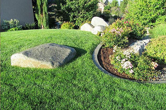 Lawn photo from Sacramento County Master Gardeners
