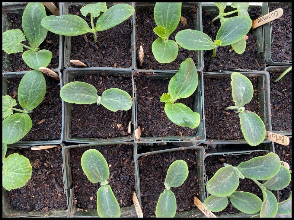 Vegetable seedlings - by Laura Monczynski