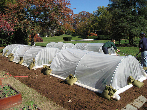Row cover at White House Garden, USDA website