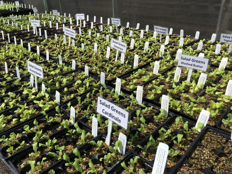 Seedlings growing at Martial Cottle Park facility, Allen Buchinski
