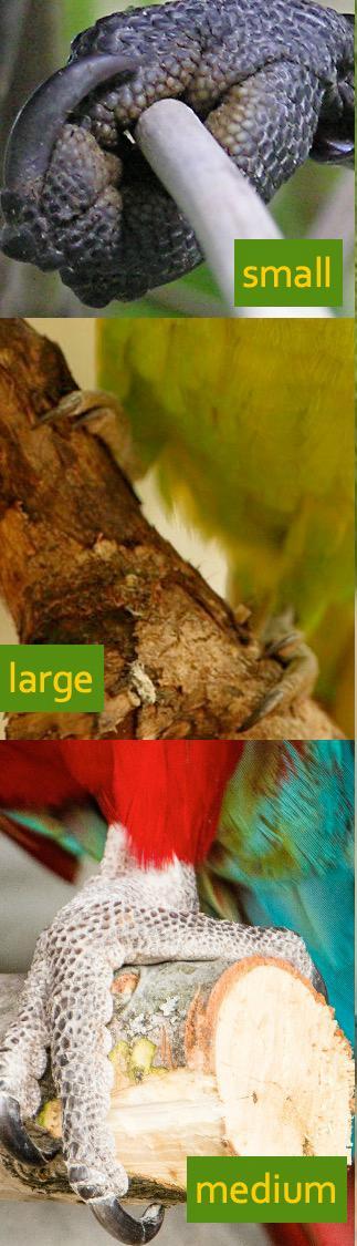 perch sizes