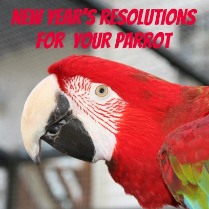 New Year's Resolutions for your parrot