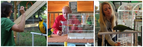 A series of three parrot training pictures from STEP UP workshops