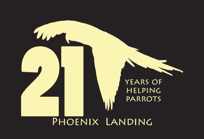 21 Years of Helping Parrots Phoenix Landing