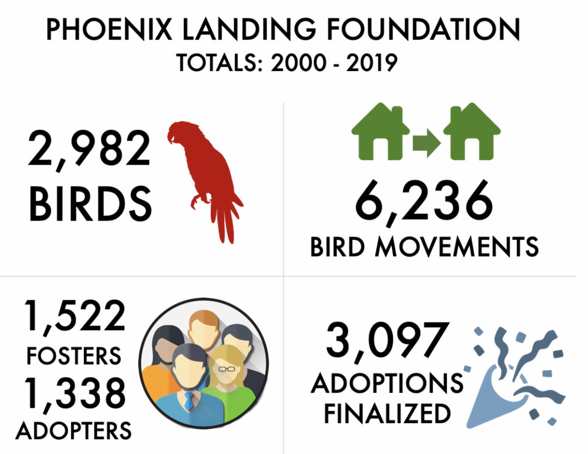 Between 2000 and 2019, Phoenix Landing ha s had 2,982 birds. This involved birds moving to new foster or adoptive homes 6,236 times. 1,522 families have fostered, and 1,338 families have adopted. 3,097 adoptions have been finalized.