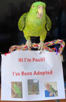 Pauli the Amazon is adopted