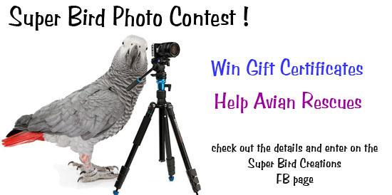 Super Bird Photo Contest