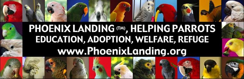 Phoenix Landing, Helping Parrots www.phoenixlanding.org