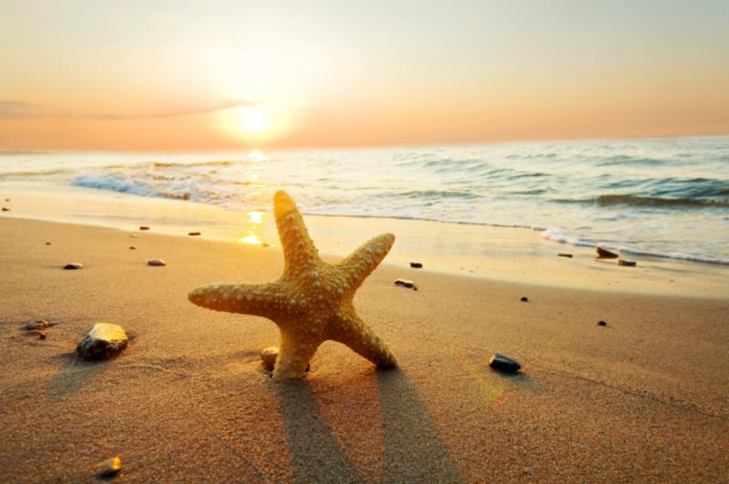 starfish_sun.jpg
