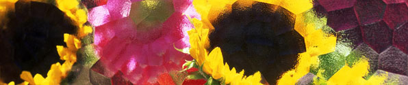 glassy-sunflowers-bnr.jpg