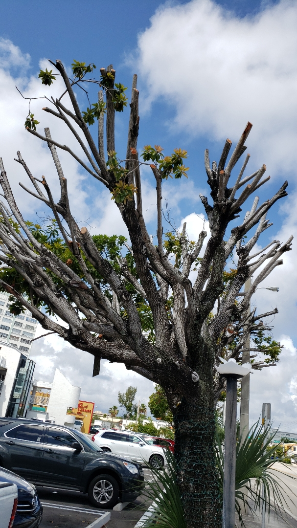 Example of Tree Abuse