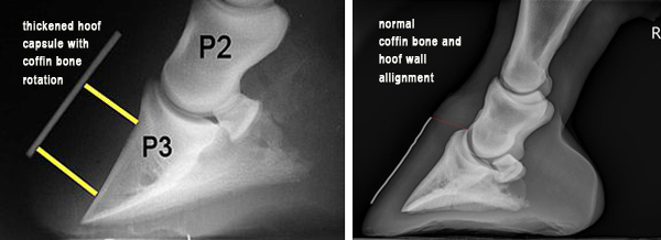 equine foot radiographs, abnormal and normal, lateral views