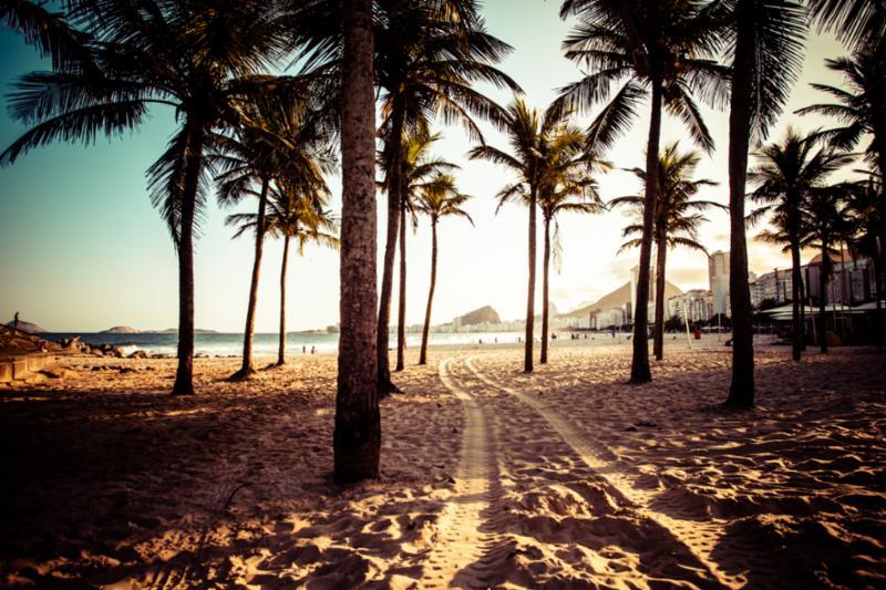 tropical_beach_palm_trees.jpg