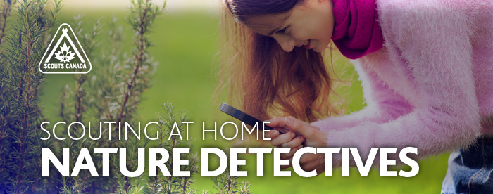 Scouting at Home: Nature Detectives