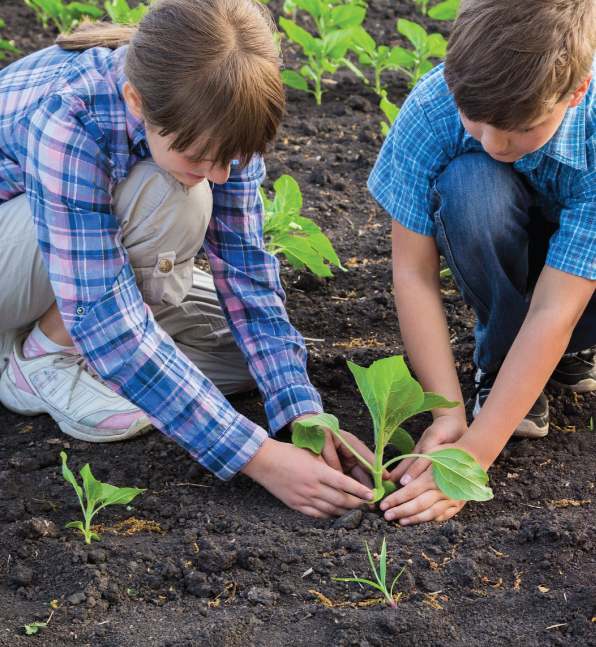 Trail Card Activities - Plant Seeds