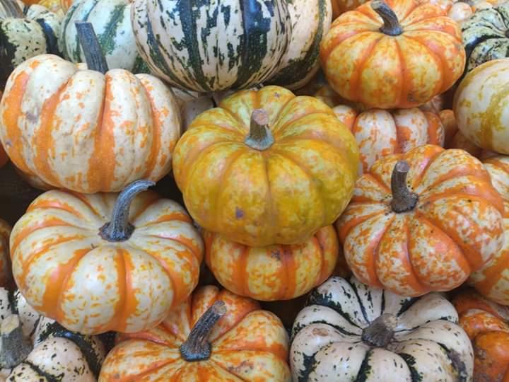 Pumpkins Colorful