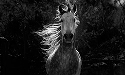 Nature - Equus--Story of the Horse