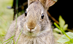 Nature - Remarkable Rabbits