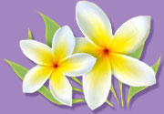 purple-yellow-flowers.jpg