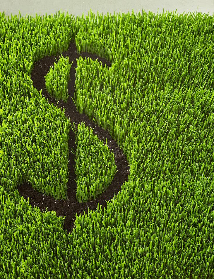 money_grass.jpg
