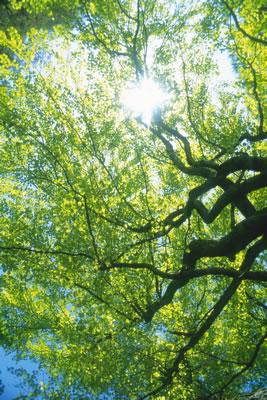 sunny-tree-boughs.jpg