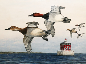 2017 Duck Stamp Image